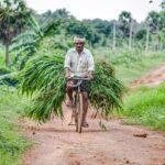 indian farmer essay